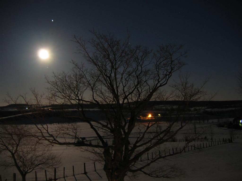 Moon_Jupiter_Tree - The moon and Jupiter rising over a snowy field.